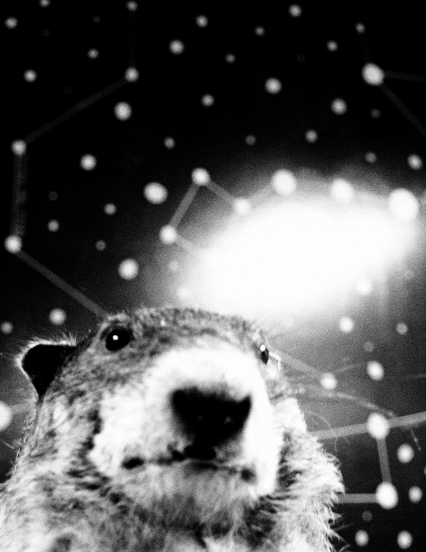 Space Groundhog