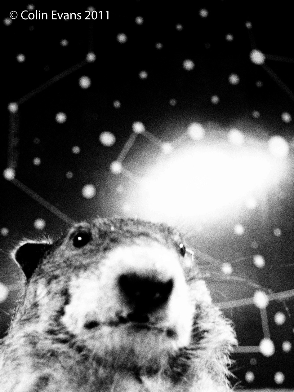 Space Groundhog